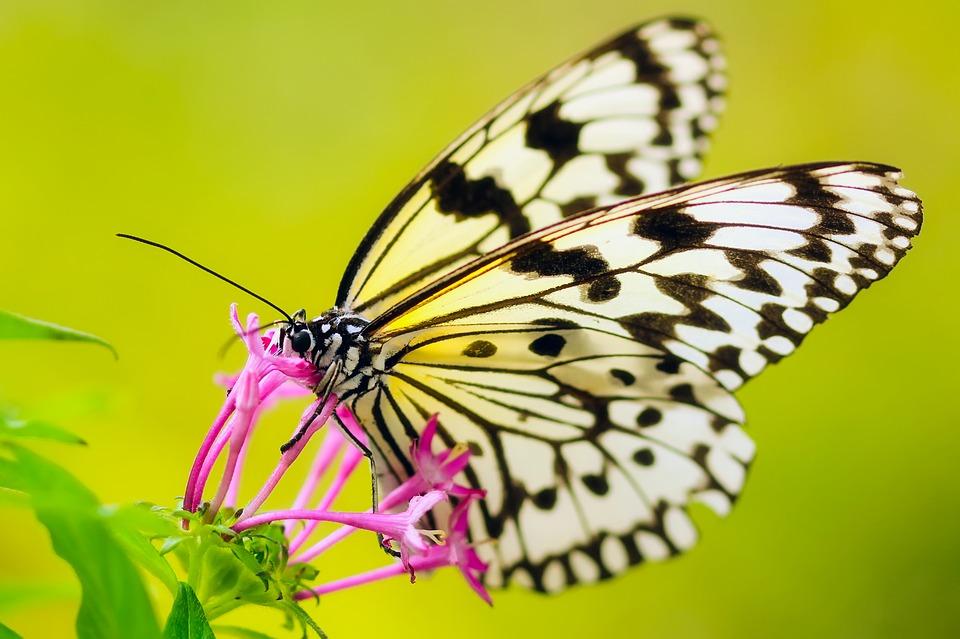 butterfly-204
