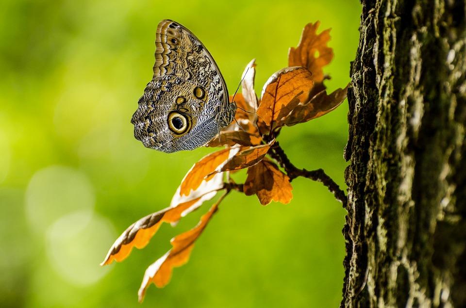 butterfly-31