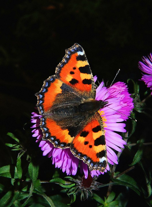 butterfly-46
