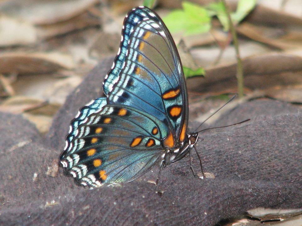butterfly-94