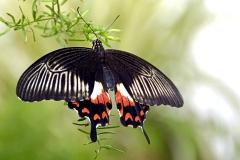 butterfly-152