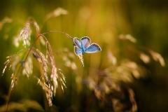 butterfly-19