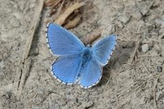 butterfly-21