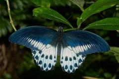 butterfly-304