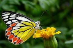 butterfly-85