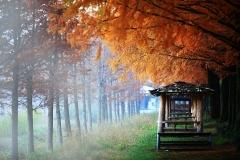 Autumn damyang
