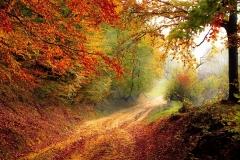 Autumn road-