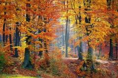 Autumn woods-