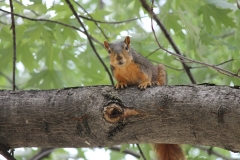 squirrel-387759_960_720