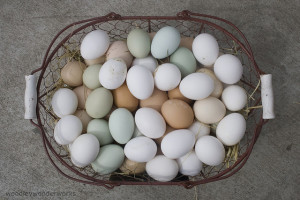 Healthy Egg Production