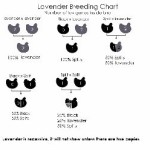 Lavender color breeding chart (300x248)