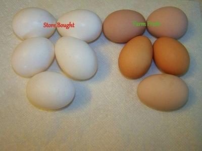 Fresg Eggs 1