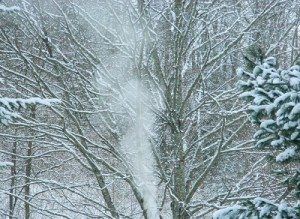 Winter Delight 2