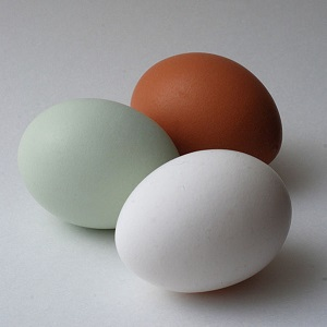 Araucana Chicken Egg