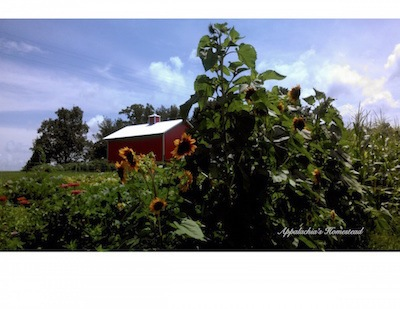 New Homestead Garden