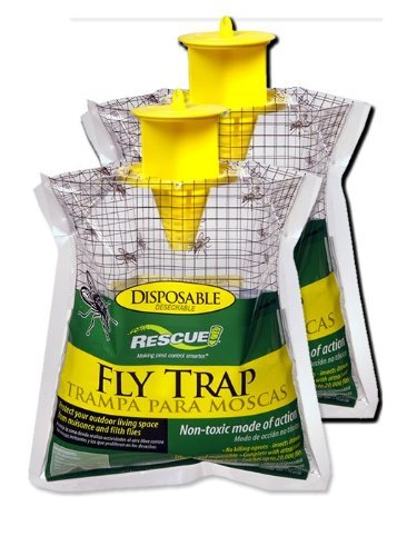 Best Fly Bait for Fly Traps