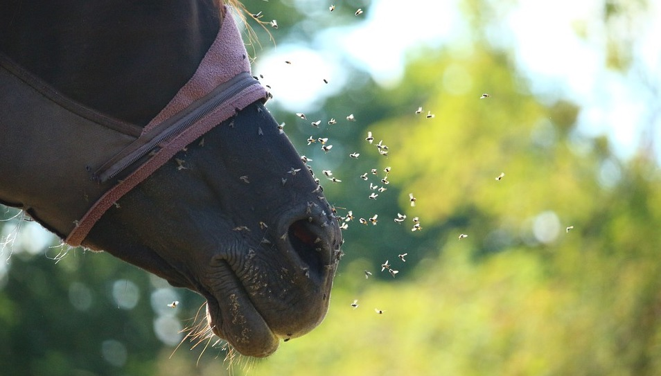 Best fly spray for Horses