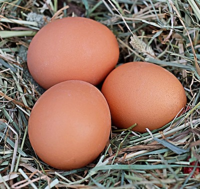 When do Chickens start laying eggs