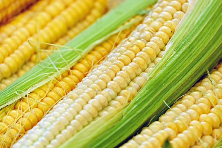 Boil Corn on the Cob